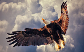 eagle-video-creating-single-exposure-hdr-image