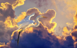 white-egret-photoshop-cloud-background-composite
